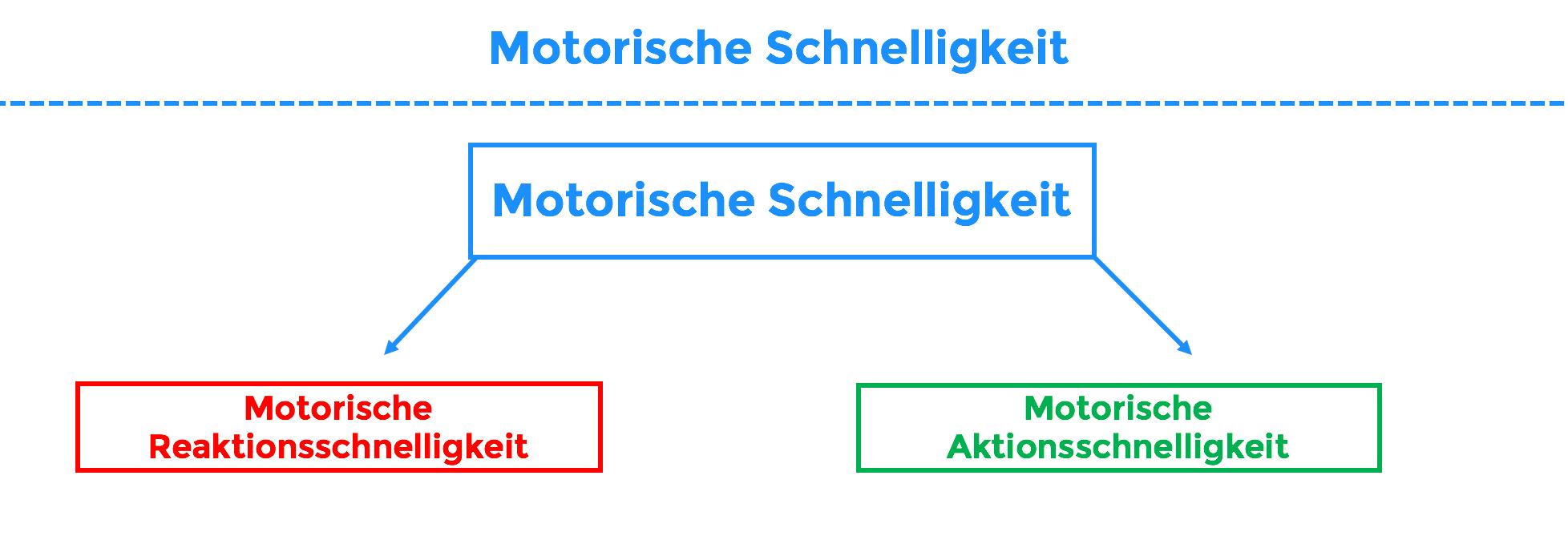 motorische schnelligkeit