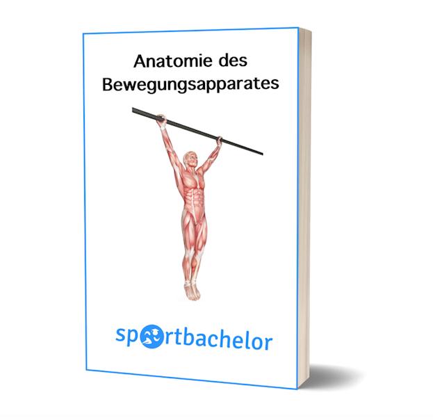 Anatomie-Atlas - sportbachelor
