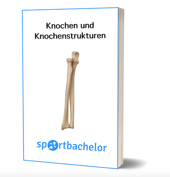 knochen e-book