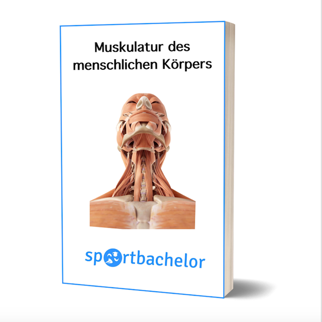 muskulatur ebook