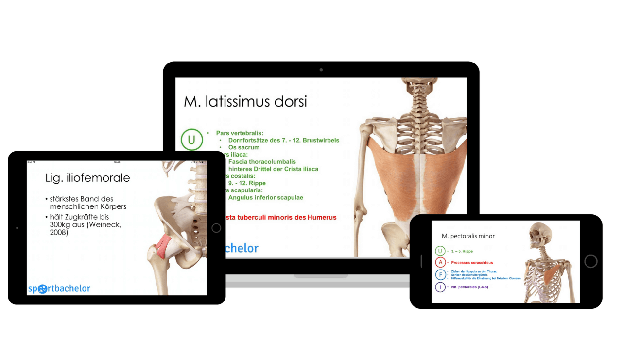 Anatomie-Atlas Devices