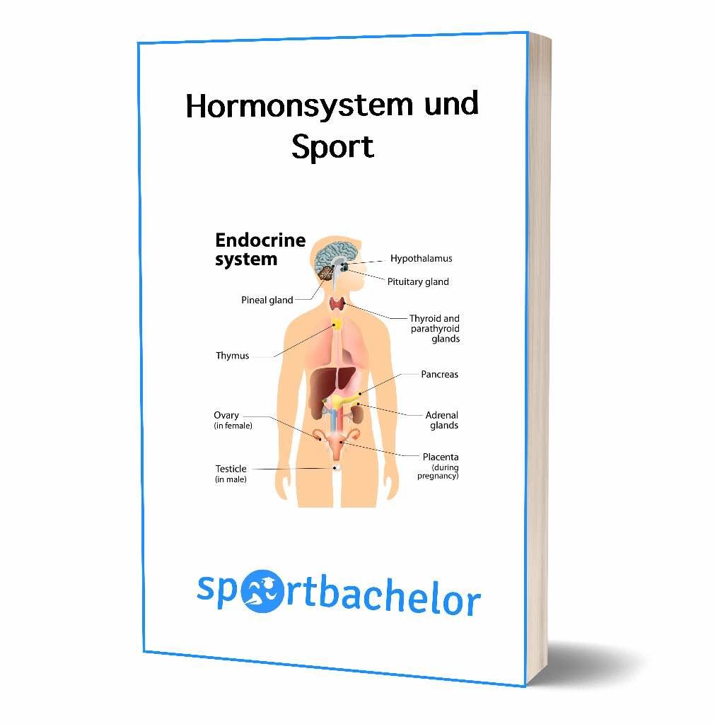 Ungewöhnlich Weibliche Hormonsystem Zeitgenössisch - Menschliche ...